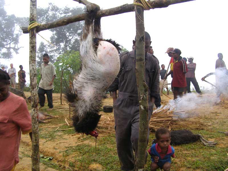 Cassowary attack victim - photo#4