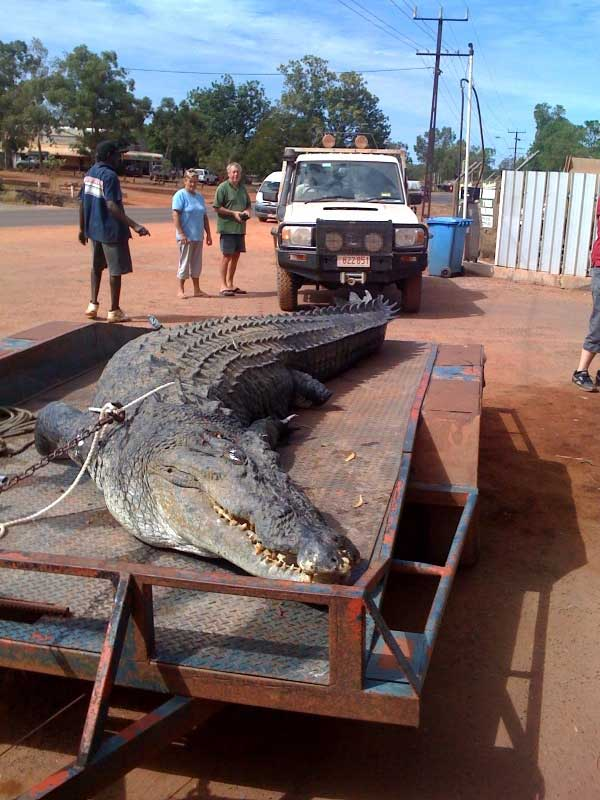http://www.amazingaustralia.com.au/animals/pictures/monster-croc-5.jpg