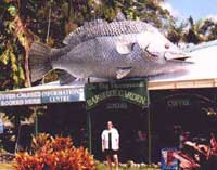 big barramundi daintree village
