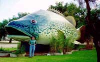 big murray cod
