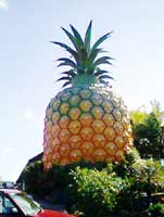 big pineapple nambour