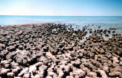 stromatolites on the west australia coast