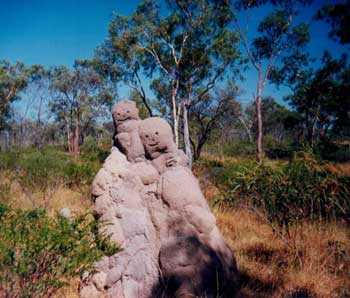 termite mound on border of queensland and northern territory