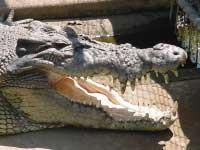 crocodylus park darwin